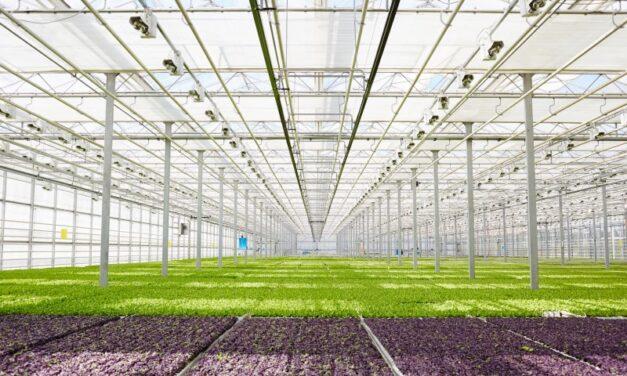Rekomendasi Bisnis petani di era milineal